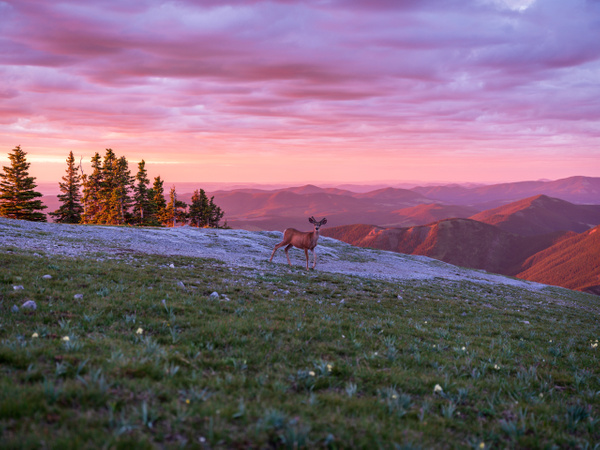 Sunrise - Prairie Meets the Canadian Rockies by Yves...