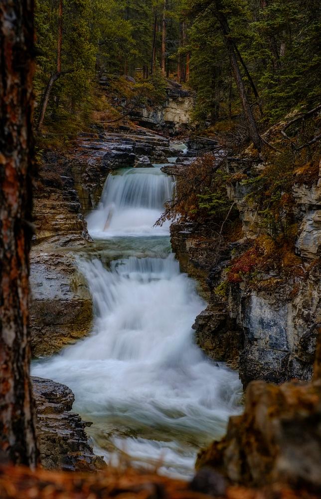 Beauty Creek Under a rainy morning,  Banff National Park, Alberta, Canada