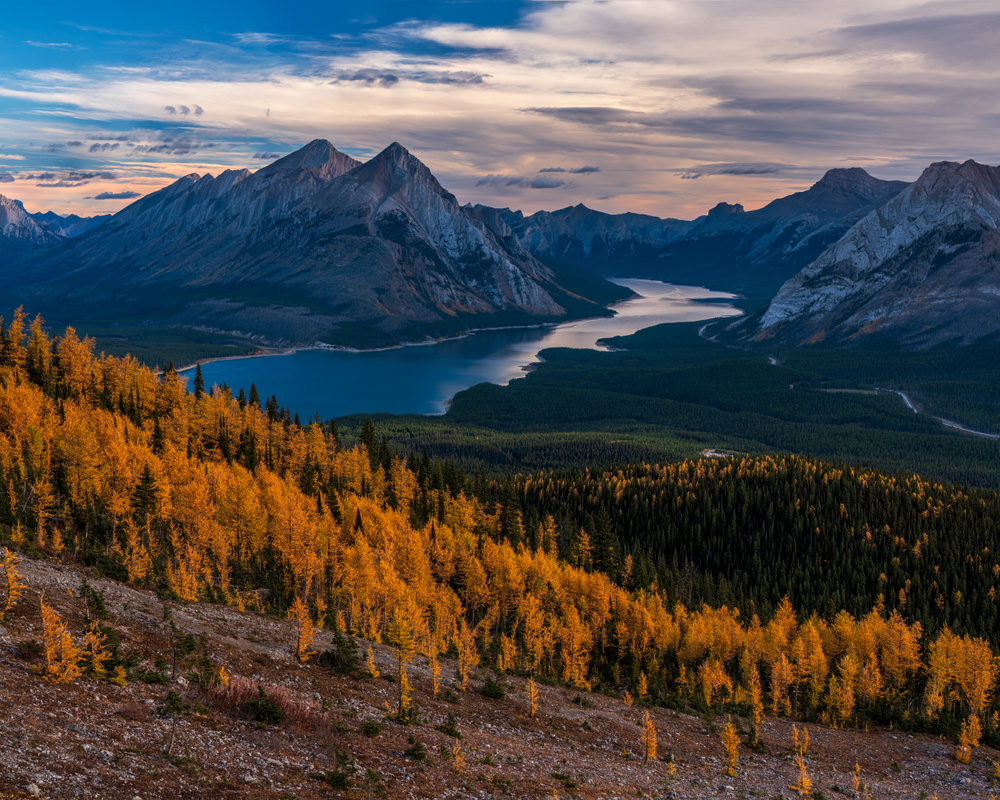 Fall Colors Larch Trees, Canmore, Alberta, Canada