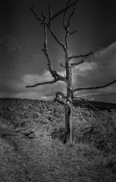 Shenandoah National Park  (US1743) - Black White -Bella Mondo Images