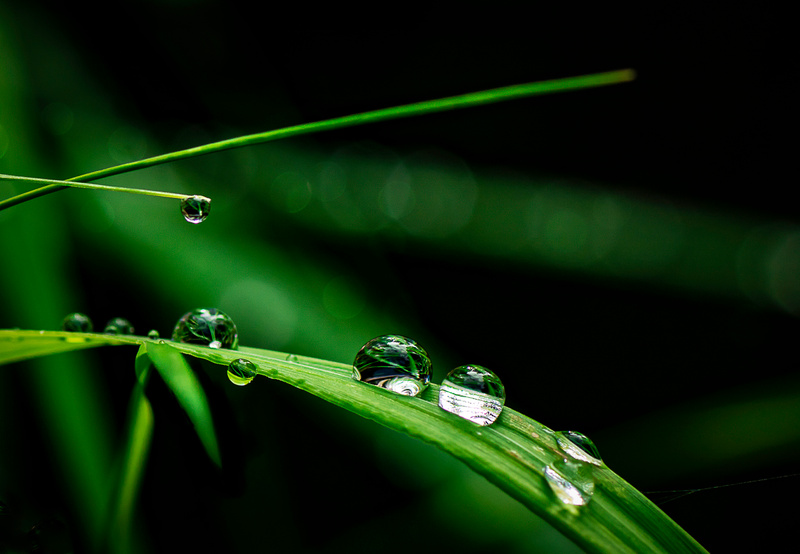 Grass Rain