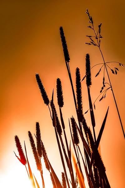 Grass 2 by Snowkeeper