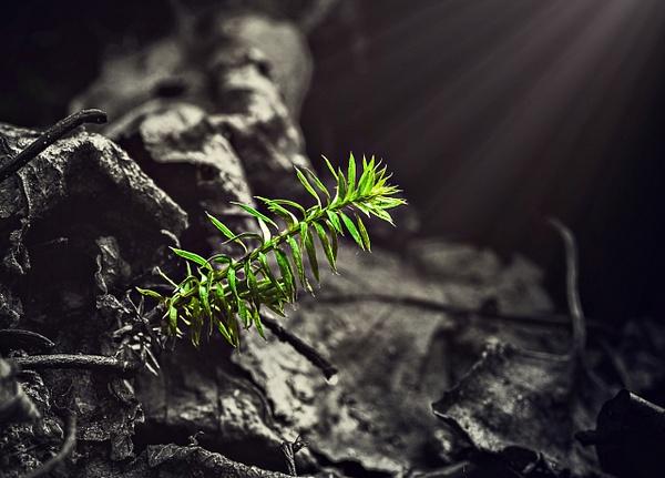 Little Tree Sunbeam by Snowkeeper