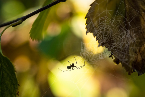 Fall Spider by Snowkeeper