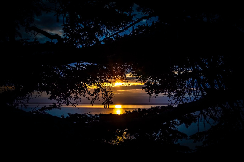 Turnagain Tree Sunset