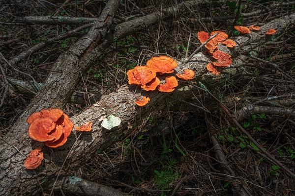 Mushroom on a Log-00509 - Items of Interest - Jack Smith Studio