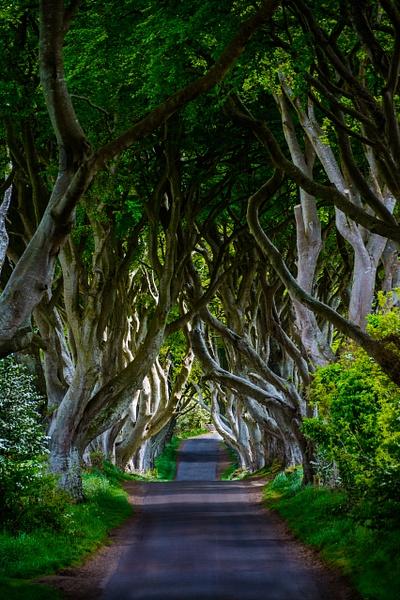 The Dark Hedges, Ireland - D7100.1259-Edit - Travel - Jack Smith Studio