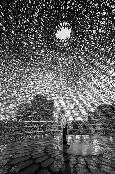 The Hive - Black and White - MassimoUsai