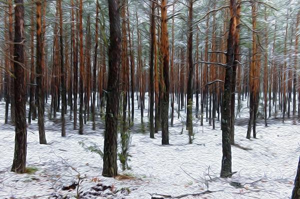 Forest - Oil Paint - MassimoUsai