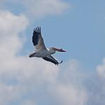 Nygren Wetlands Preserve