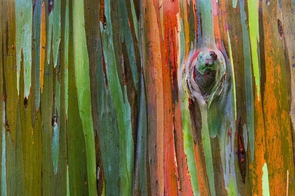 Rainbow Tree Hor tripod - Nature - Steve Juba Photography