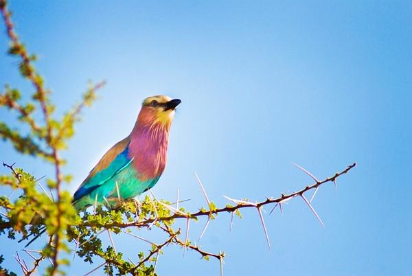 color bird 2 - Wildlife - Steve Juba Photography