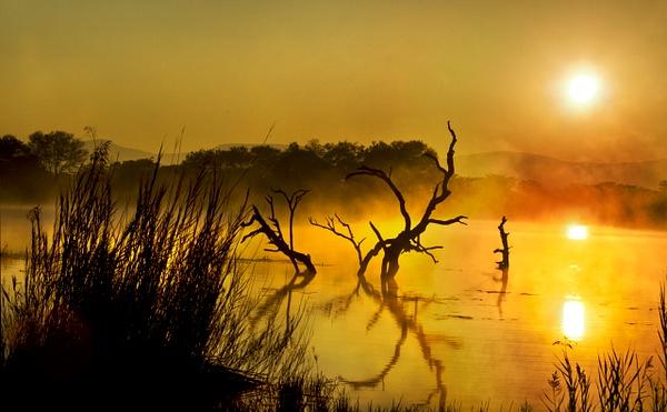 Dead Tree Dawn crop - Landscape -  Steve Juba Photography