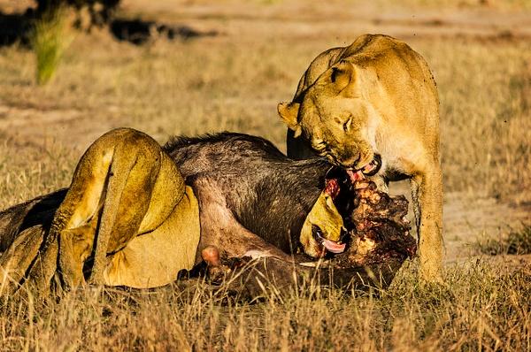 Cavity Search - Wildlife - Steve Juba Photography
