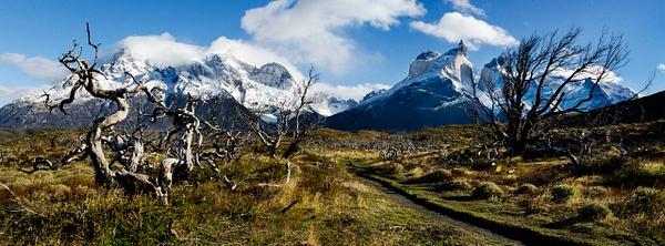 Tree Massif Pan - Landscape -  Steve Juba Photography