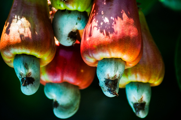 cashew - Nature - Steve Juba Photography