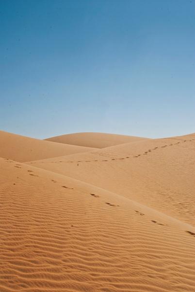 desert vert - Nature - Steve Juba Photography