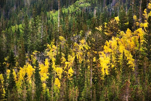 Aspen Streak - Landscape -  Steve Juba Photography