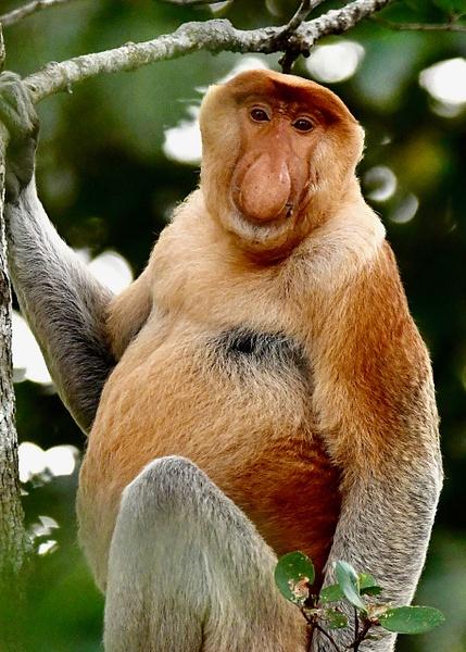 Borneo 3 - 15 - Wildlife - Steve Juba Photography