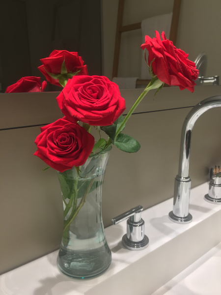 Roses left daily in room by Lovethesun