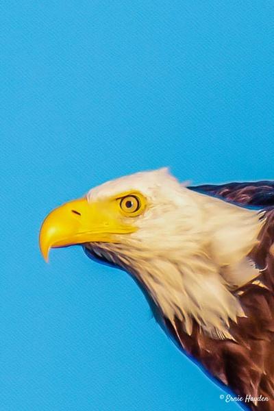 20200813_C Gold Hour Herons_022-Edit-Edit - Eagles & Raptors - Rising Moon NW Photography