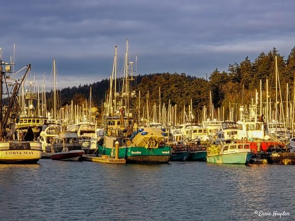 Cap Sante Harbor, Anacortes - Golden Hour - Rising Moon NW Photography
