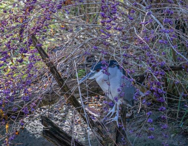 Maryland Zoo - Home - Howard Berliner Photography