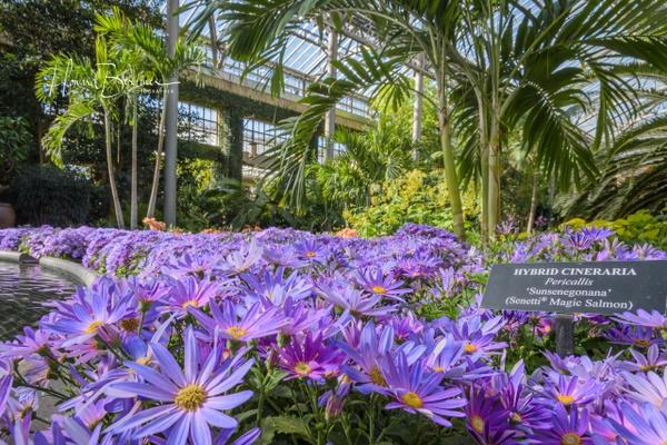 Longwood Gardens - Home - Howard Berliner Photography