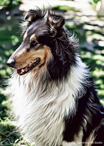 Collie-Dog-012 - Pet Illustrations - LuminousLight