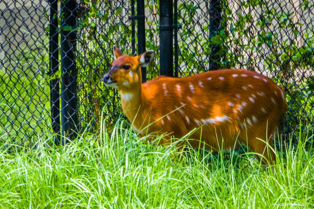 Maryland Zoo (Baltimore)