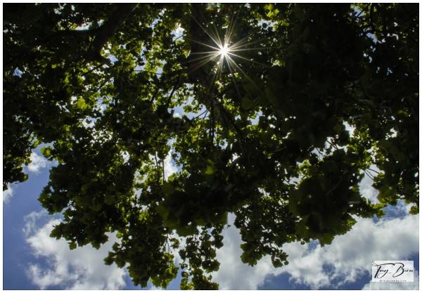 _DSC0507 - Spirit of Life - Tony Burns Photography