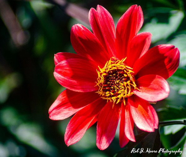 Red Flowers - Longwood Gardens 2020 - Flowers & Gardens - Robert Moore Photography