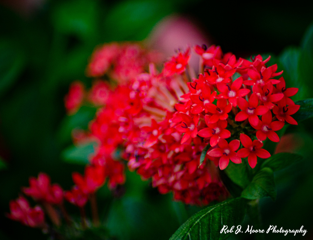 Small Red Flowers - Longwood Gardens 2020