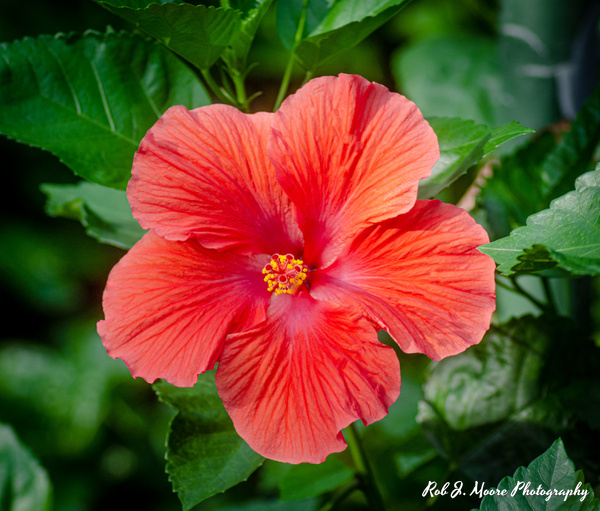 Light Red Flowers - Longwood Gardens 2020 - Home - Rob J Moore Photography