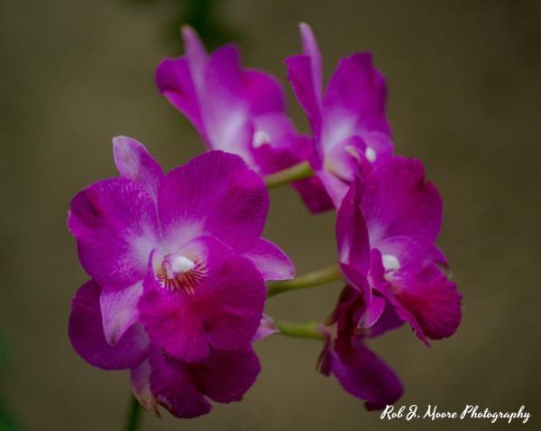 Purple Flowers - Longwood Gardens 2020 - Flowers & Gardens - Robert Moore Photography