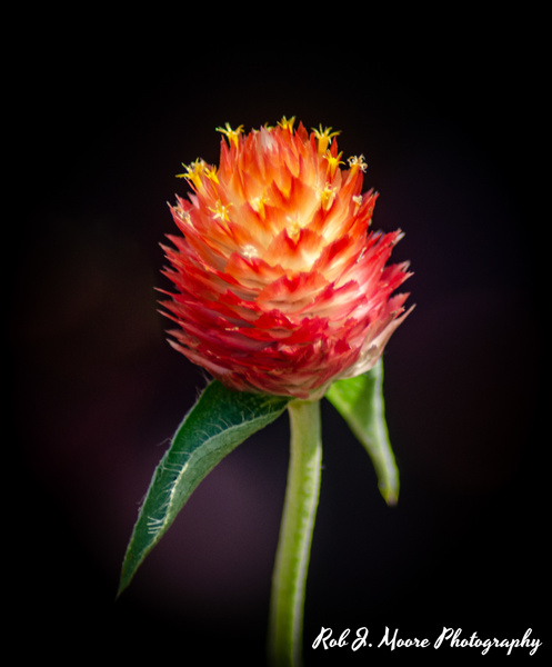Orange Flowers - Longwood Gardens 2020 - Flowers & Gardens - Robert Moore Photography