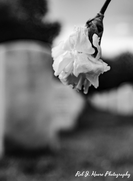 2019 Arlington 05 - Arlington National Cemetery - Robert Moore Photography