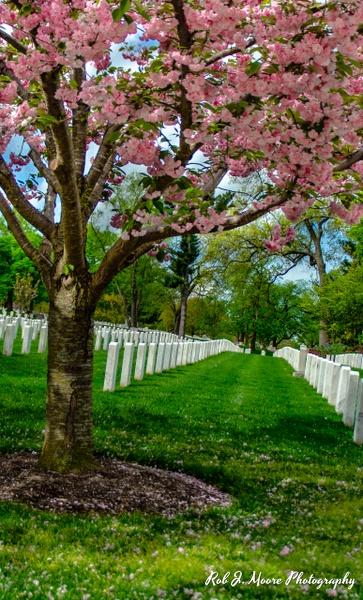 2019 Arlington 09 - Arlington National Cemetery - Robert Moore Photography