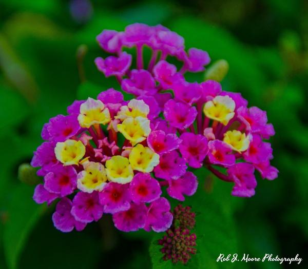 Flowers Violet - Philadelphia - Robert Moore Photography
