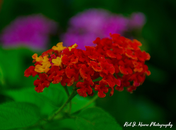 2019 Flowers Red - Philadelphia - Robert Moore Photography